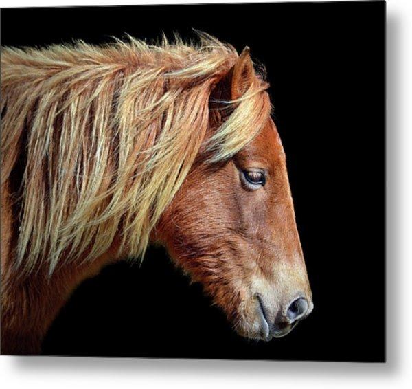 Metal Print featuring the photograph Assateague Pony Sarah's Sweet Tea Portrait On Black by Bill Swartwout Fine Art Photography