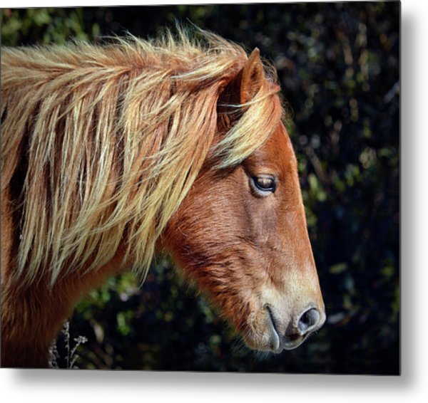 Metal Print featuring the photograph Assateague Pony Sarah's Sweet Tea Profile by Bill Swartwout Fine Art Photography