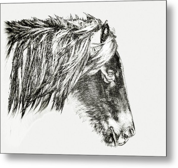 Metal Print featuring the photograph Assateague Pony Sarah's Sweet Tea Sketch by Bill Swartwout Fine Art Photography