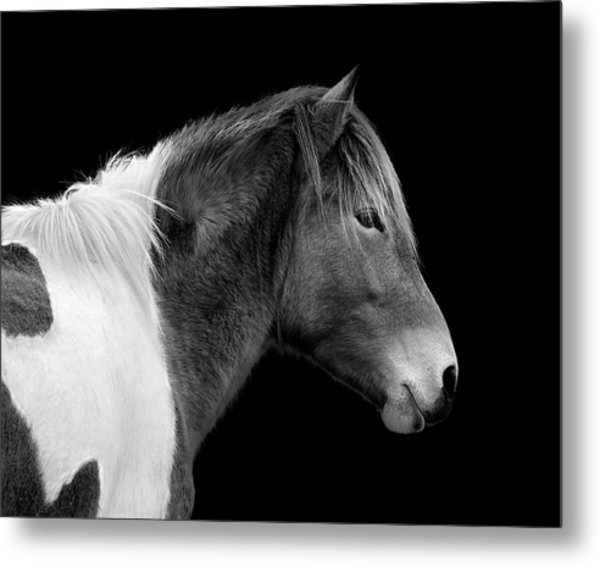 Metal Print featuring the photograph Assateague Pony Susi Sole Black And White Portrait by Bill Swartwout Fine Art Photography