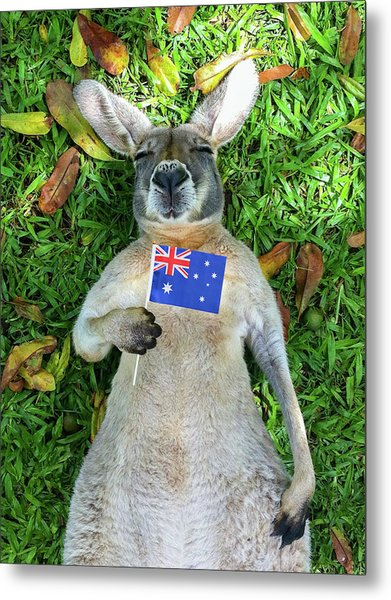 Australian Kangaroo Metal Print by Mb Photography