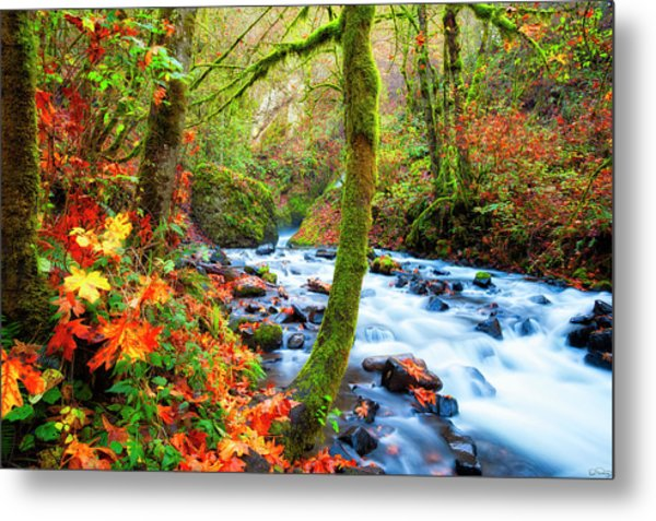 Autumn Along Bridal Veil Creek Columbia River Gorge Metal Print