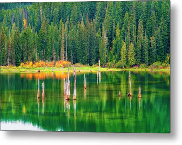 Autumn At Goose Lake Gifford Pinchot National Forest Metal Print