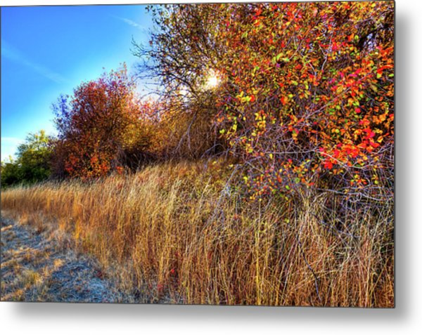 Metal Print featuring the photograph Autumn At Magpie Forest by David Patterson