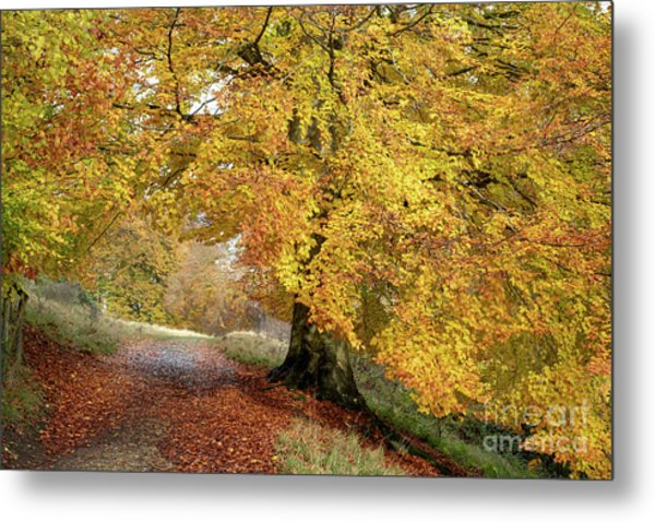 Autumn Beech Walk Metal Print by Tim Gainey