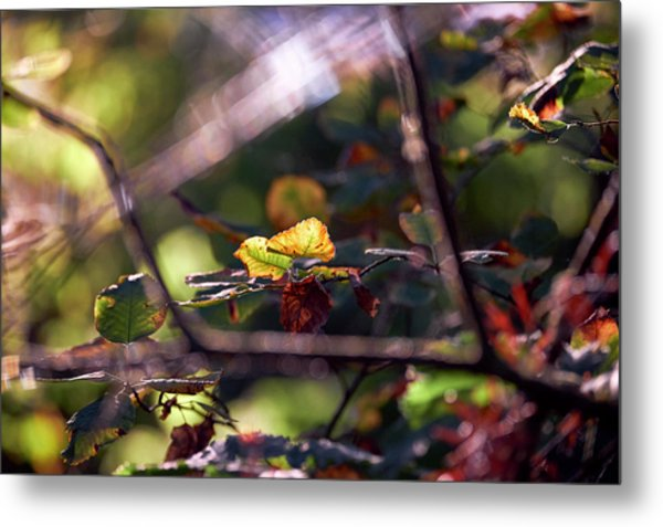 Metal Print featuring the photograph Autumn Beginnings by Whitney Goodey