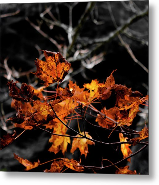 Autumn Brown Metal Print by Christine Buckley