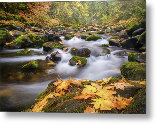 Metal Print featuring the photograph Autumn Creek by Nicole Young