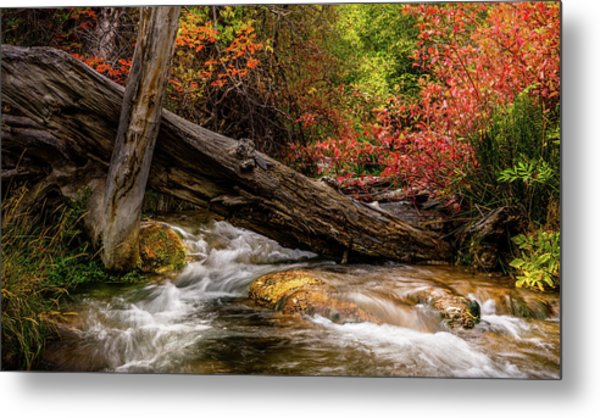 Metal Print featuring the photograph Autumn Dogwoods by TL Mair