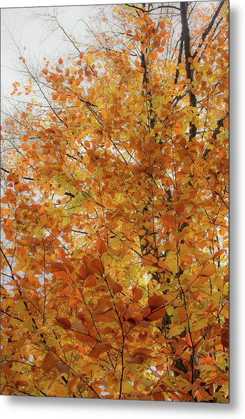 Autumn Explosion 1 Metal Print