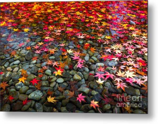 Autumn Foliage In Japan Metal Print