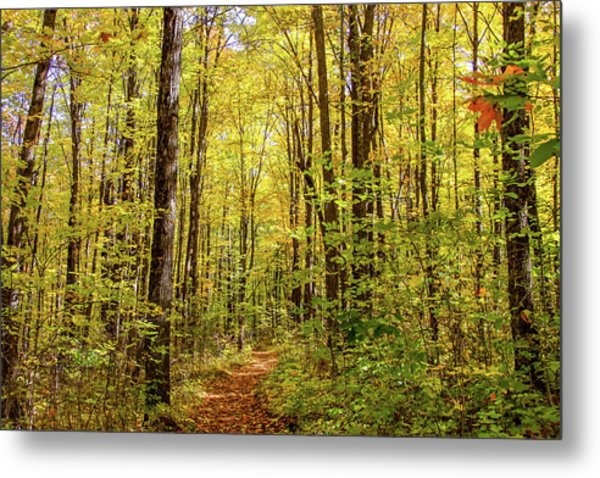 Autumn Hike Metal Print