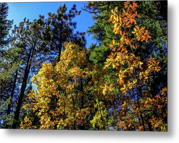 Metal Print featuring the photograph Autumn In Apache Sitgreaves National Forest, Arizona by Dawn Richards