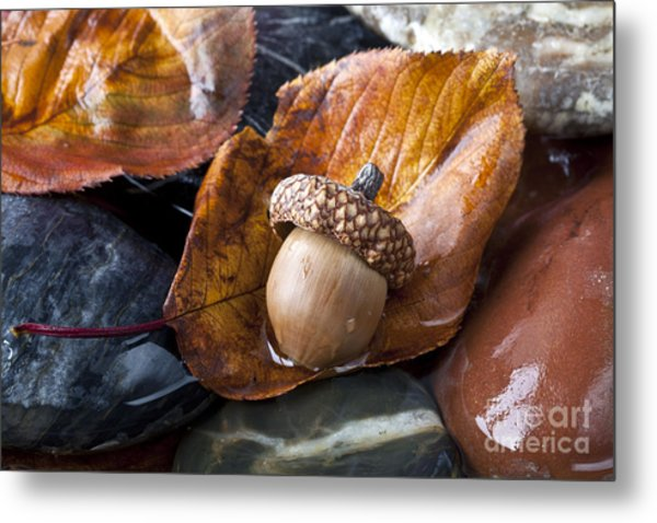 Autumn In Central Park With Acorn On Metal Print