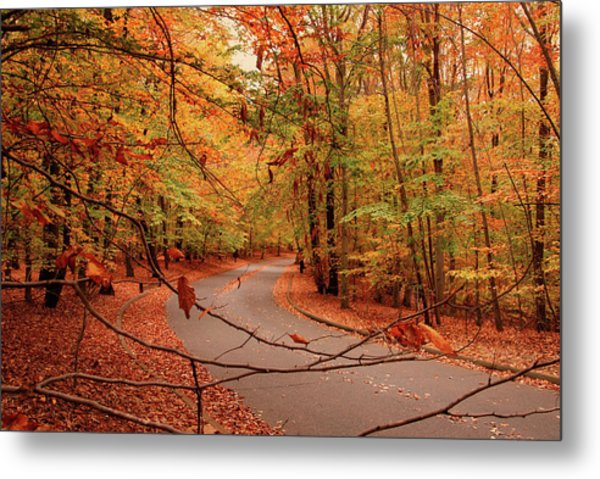 Autumn In Holmdel Park Metal Print