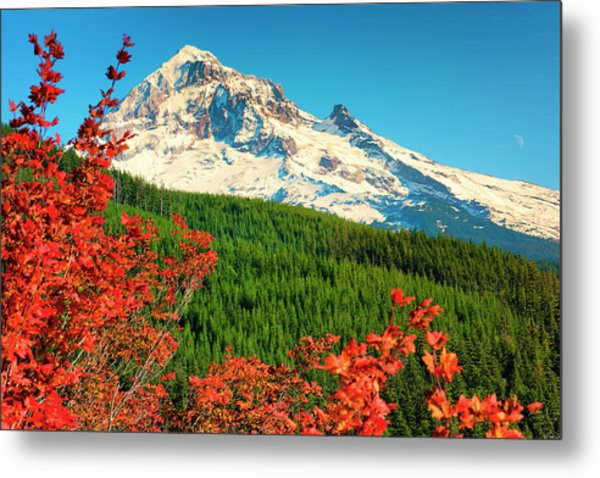 Autumn In Lolo Pass Mt. Hood National Forest Metal Print