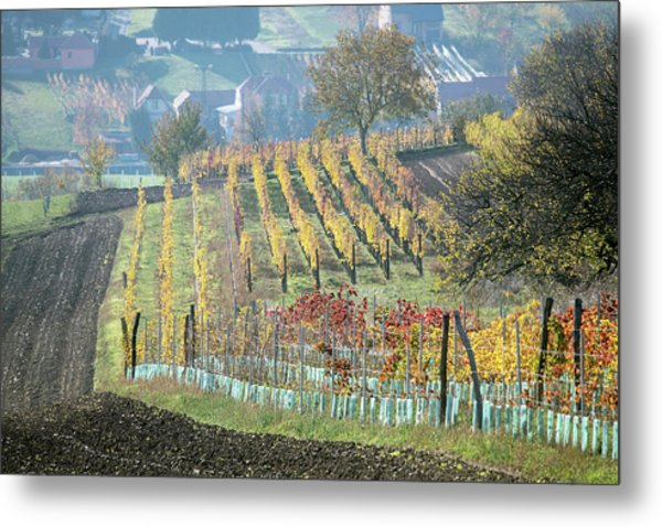 Metal Print featuring the photograph Autumn In Moravia 7 by Dubi Roman