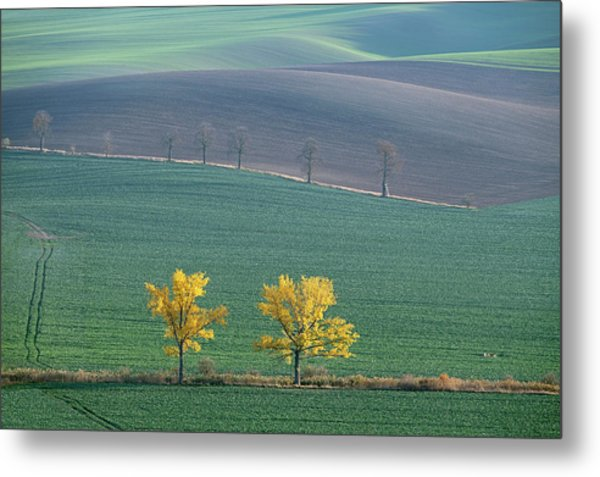 Metal Print featuring the photograph The Chestnut Way, Moravia 14 by Dubi Roman