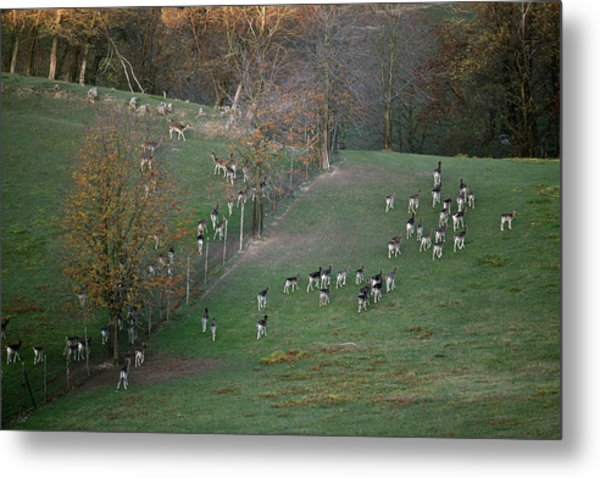 Metal Print featuring the photograph Autumn In Moravia 9 by Dubi Roman