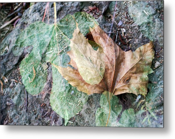 Metal Print featuring the photograph Autumn Leaves by Dubi Roman