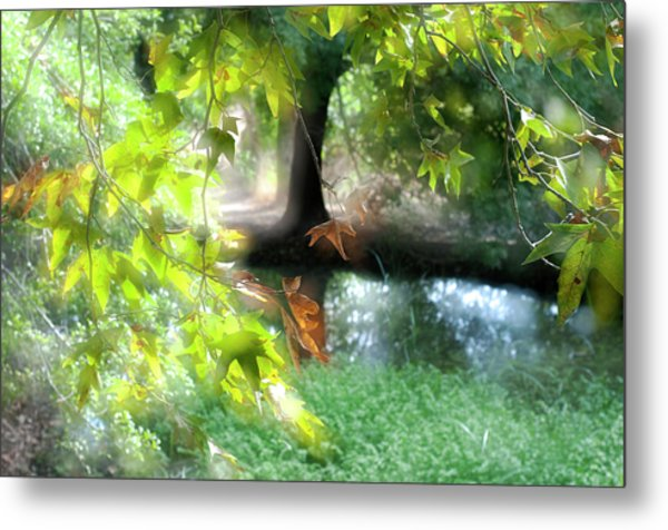 Metal Print featuring the photograph Autumn Leaves In The Morning Light by Dubi Roman