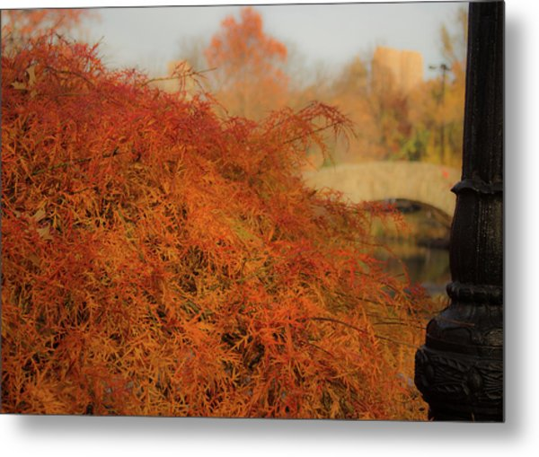 Autumn Maple Metal Print