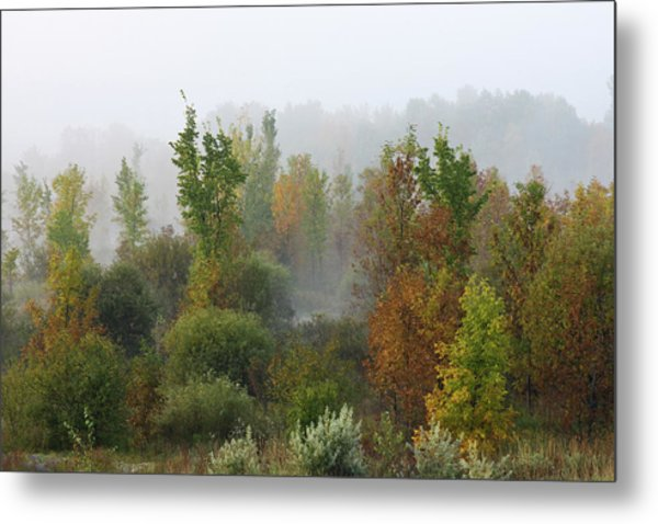 Metal Print featuring the photograph Autumn Morning Fog by Tatiana Travelways
