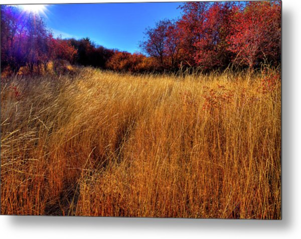 Metal Print featuring the photograph Autumn Path by David Patterson