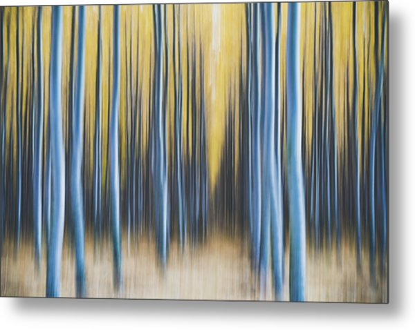 Metal Print featuring the photograph Autumn Poplars by Nicole Young