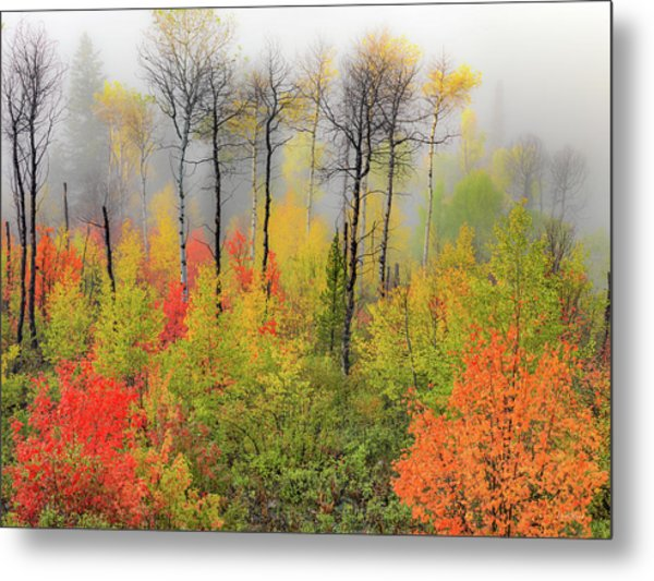 Autumn Shades Metal Print by Leland D Howard