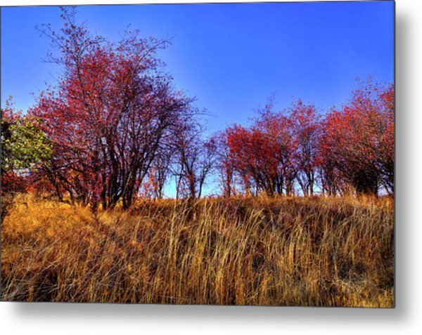 Metal Print featuring the photograph Autumn Sun by David Patterson