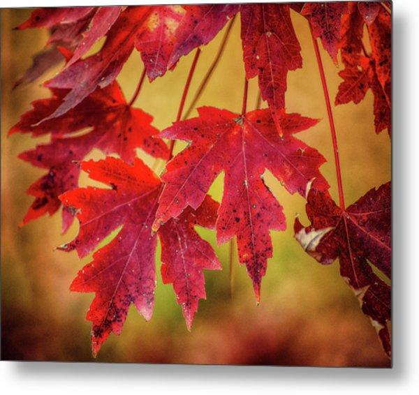 Autumn Watch Metal Print