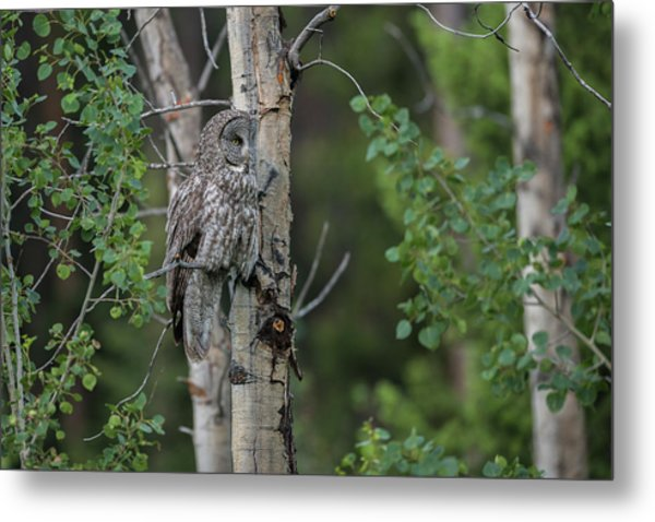 Metal Print featuring the photograph B18 by Joshua Able's Wildlife