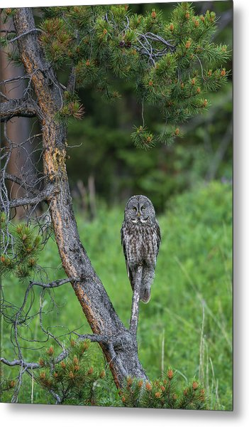 Metal Print featuring the photograph B20 by Joshua Able's Wildlife