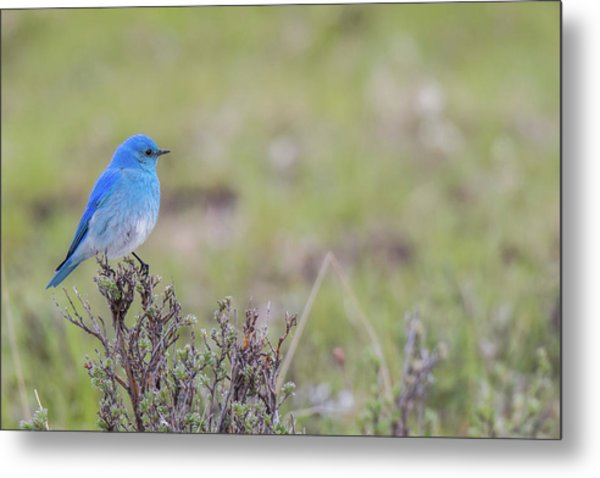Metal Print featuring the photograph B23 by Joshua Able's Wildlife