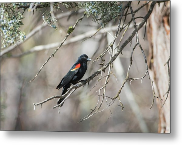 Metal Print featuring the photograph B26 by Joshua Able's Wildlife