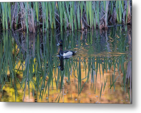 Metal Print featuring the photograph B32 by Joshua Able's Wildlife