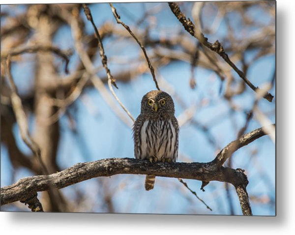 Metal Print featuring the photograph B34 by Joshua Able's Wildlife