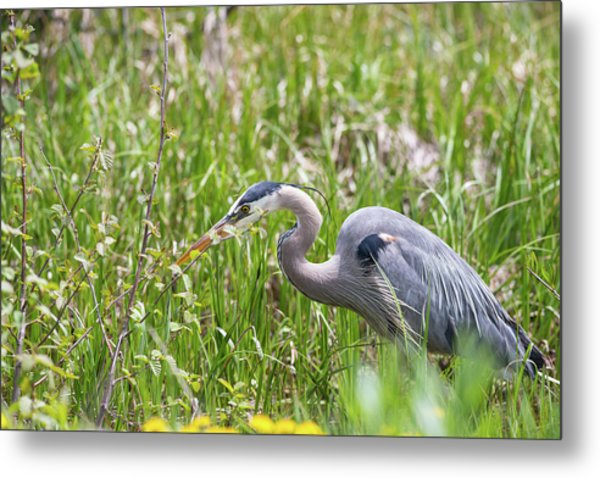 Metal Print featuring the photograph B40 by Joshua Able's Wildlife
