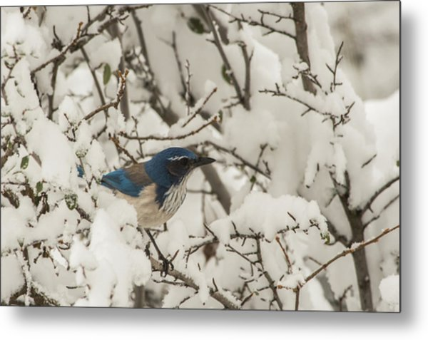 Metal Print featuring the photograph B44 by Joshua Able's Wildlife