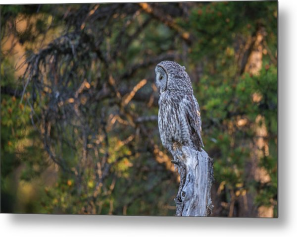 Metal Print featuring the photograph B46 by Joshua Able's Wildlife
