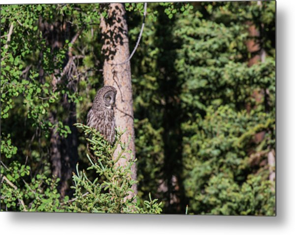 Metal Print featuring the photograph B50 by Joshua Able's Wildlife