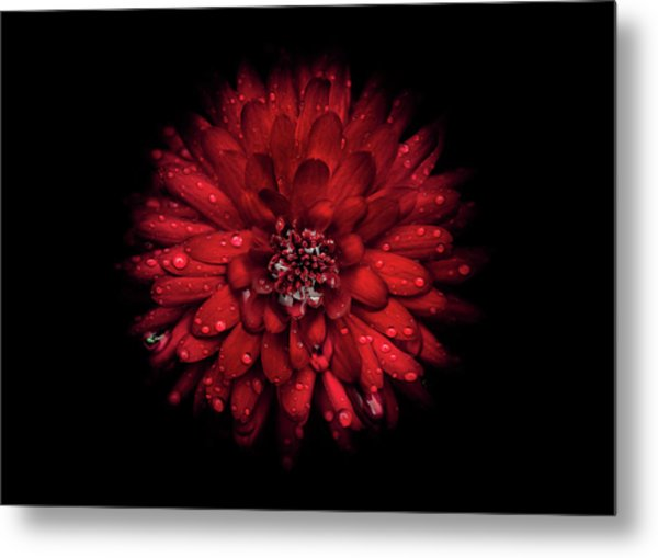 Backyard Flowers 45 Color Version Metal Print