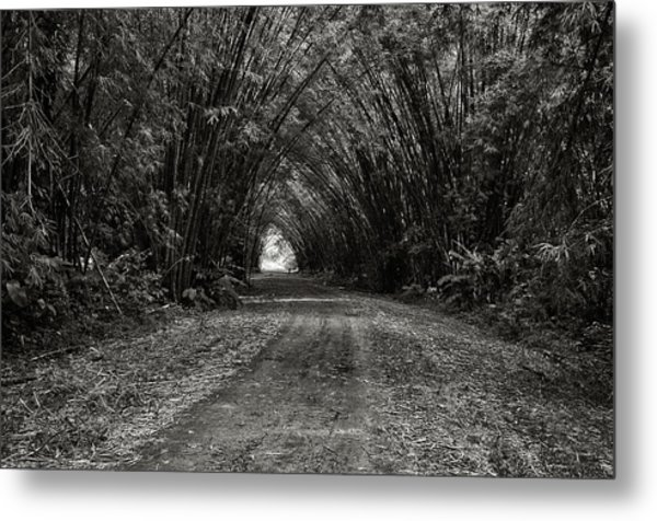 Bamboo Cathedral I Metal Print