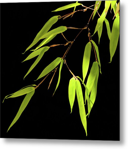 Bamboo Leaves 0580a Metal Print