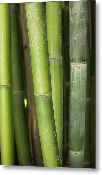 Bamboo Stalk 4057 Metal Print