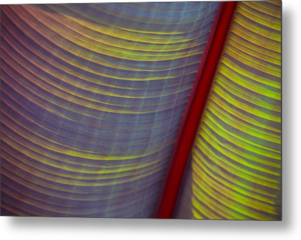 Banana Leaf 8597 Metal Print