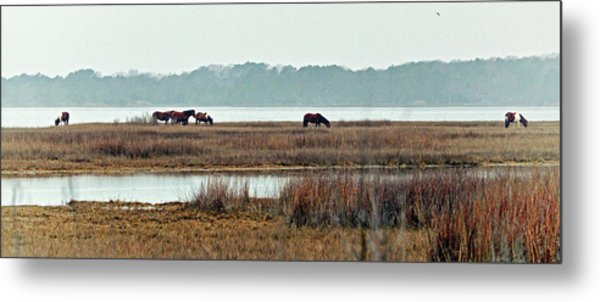 Metal Print featuring the photograph Band Of Wild Horses At Sinepuxent Bay by Bill Swartwout Fine Art Photography