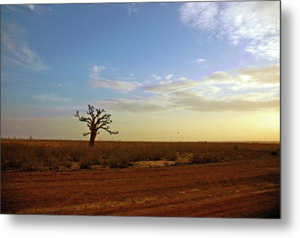 Metal Print featuring the photograph Baobab Tree At Sunset by Mark Duehmig