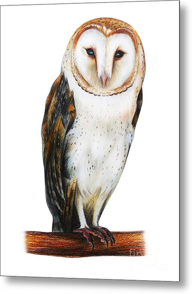 Barn Owl Drawing Tyto Alba Metal Print